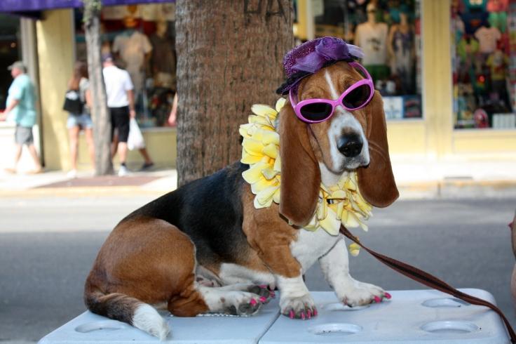 Busker Dog
